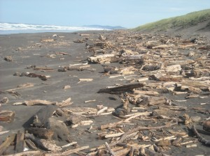 Miles of Driftwood
