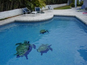 Swim with turtles In your pool